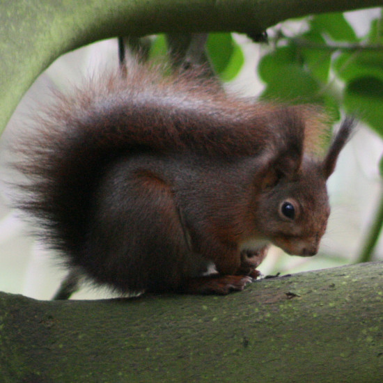 mybest2010photofriday squirrel luxembourg