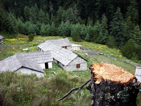 house destruction forest deforestration