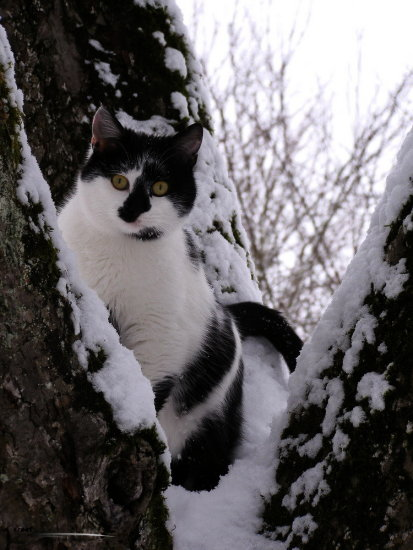 cat animal snow winter