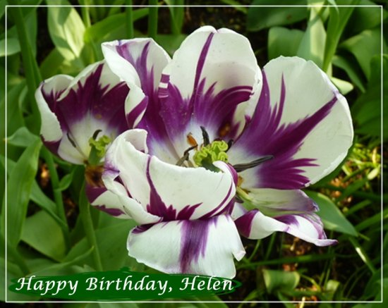 Happy Birthday helen flump