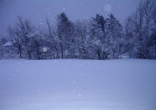 weather winter USA england new maine snow night dark trees pretty erin oconnor