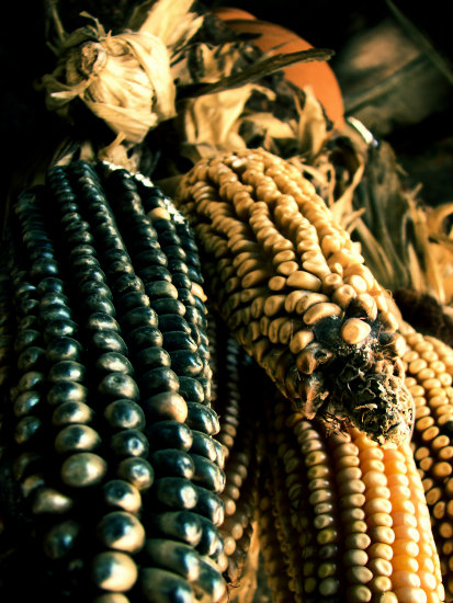 corn cob mexico puebla stilllife