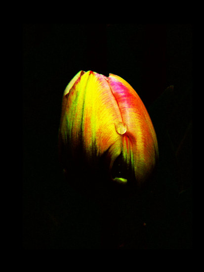 flower in dark