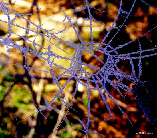 Frost Cold Ice Spidersweb