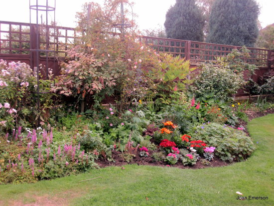 My Autumn garden
