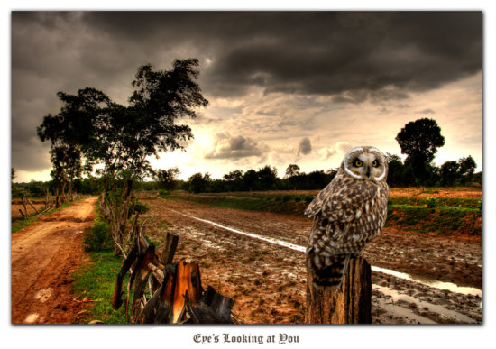 rice fields thailand owl cloud