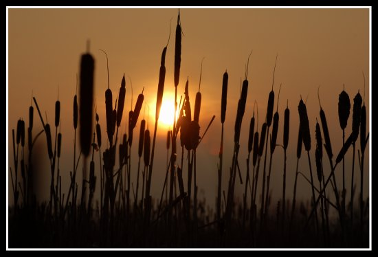 sun sunset reeds bullrushes silhouette greylake somerset somersetdreams