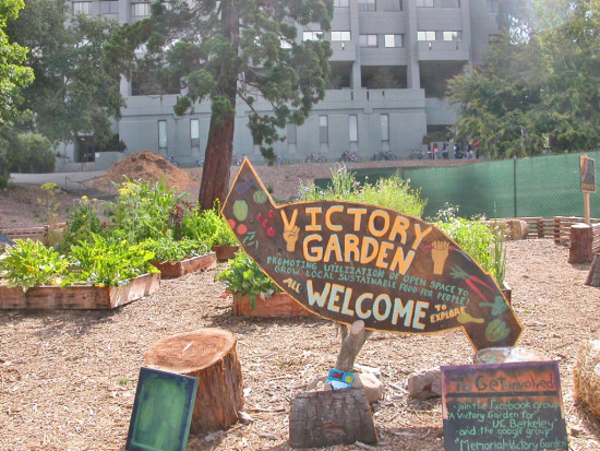 ucbfph garden uc berkeley university victory vegetables herbs sign