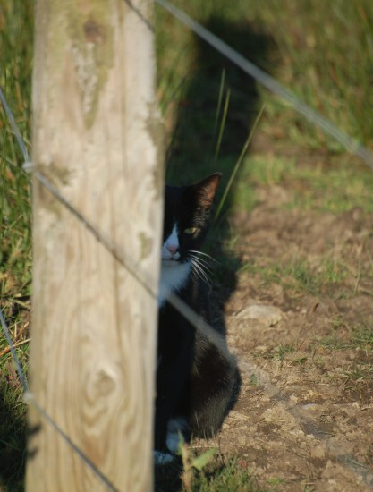 cat hiding newport