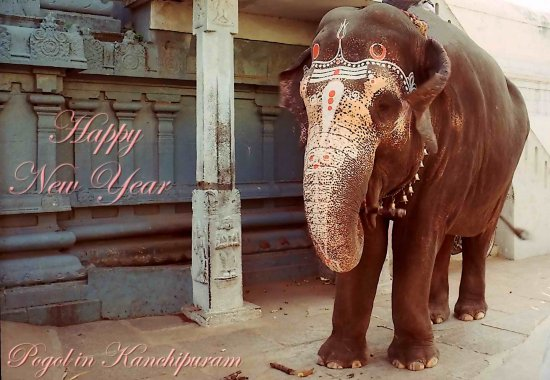 india kanchipuram animal elephant indix kancx animx elepx proverbmonday