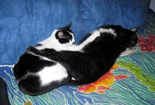 The world's most adorable cats: Groucho and Hugo!