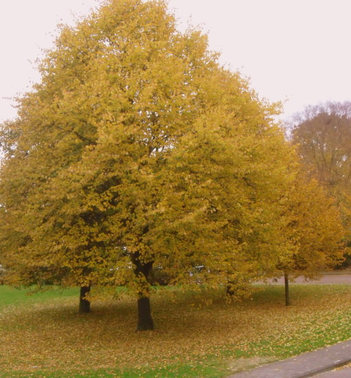 nature autumn tree