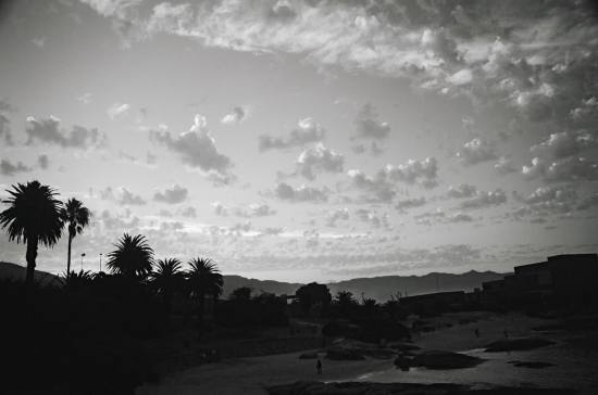 africa sunset palms blackandwhite bw