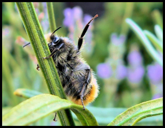 insect bumble bee waving goodbye