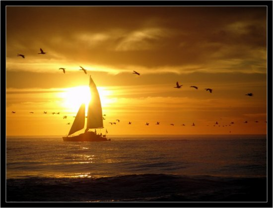 yacht sunset birds