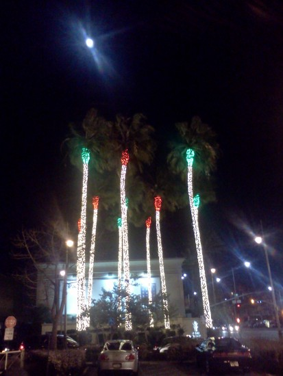 Christmas palms at The Grove