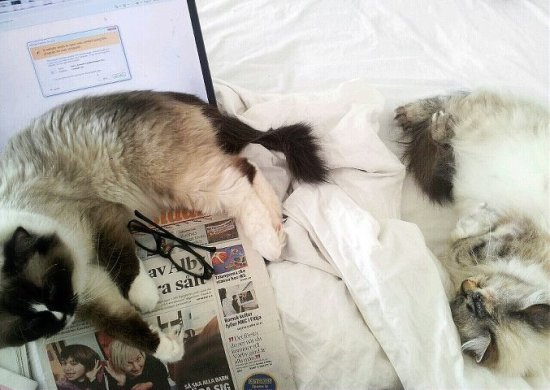 Hahaha, morning glory. I tried to read email...i gave up, I tried to read the paper..I gave up.