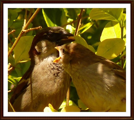 One more of a caring mum and a lovely young sparrow...;-)