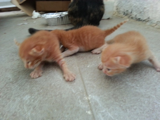 3 Kittens Open They Eyes