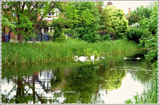 reflectionthursday swans canal