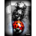 ladybirds saffi9 bwcolourfriday