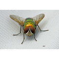 nature insect fly macro