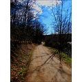 nature road path tree forest sky cloud shadows