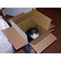 lol...Wild Kitty in a box