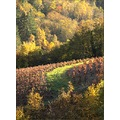 autumn France october vineyard landscape trees