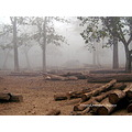 foggy morning dandeli karnataka forest