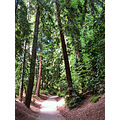 redwood forest park piedmont piedmontfph path