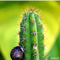 snail thorns cactus nature