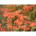 Madeira island Portugal nature wild flowers 2006 red orange