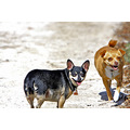 MyPetsFriday funfriday roncarlin dogs pets baby and Pixie mypetfriday