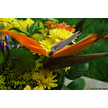stlouis missouri us usa plant flower yellow orange blue gail birthday 2006