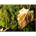 leaf nature France february winter country moss