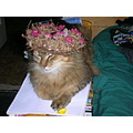 The King with his crown of flowers