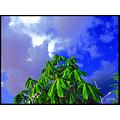 Green Tree Blue Sky Archer