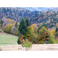 carpathians autumn colors compautumn07