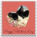 valentinesday cat