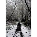 london snow path woods trees frost