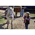 upstate newyork road lafayette apple festival pony ride girl child