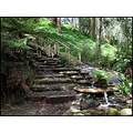 steps stairs climb stream bush track walkway