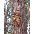 Teddy bear tree travel road perth hills littleollie