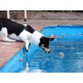 water ball toy dog puppy play pool