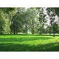 green Hyde Park London