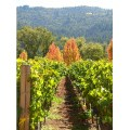 day trip to napa valley