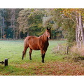 nature wood trees autumn horse