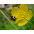 insect nature flower animal summer