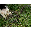 attack snake cat fight paw